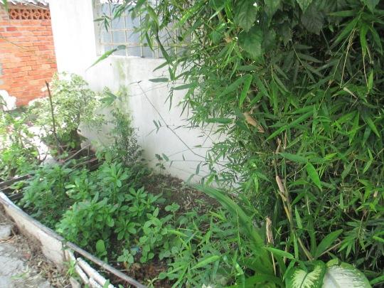 Bụi tre và vườn rau